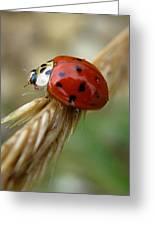 Ladybug I Greeting Card
