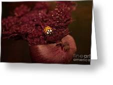 Ladybug In Chocolate Greeting Card
