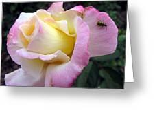Ladybug Landing Greeting Card
