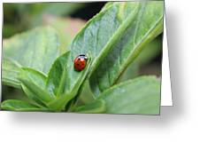 Ladybug On A Plant Leaf Greeting Card