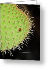 Ladybug On Cactus Greeting Card