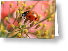 Ladybug On Fennel Greeting Card