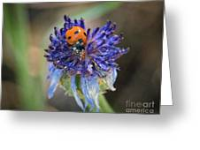 Ladybug On Purple Flower Greeting Card