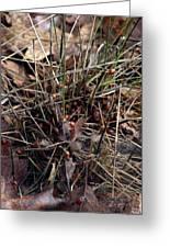 Ladybug Tuft Greeting Card