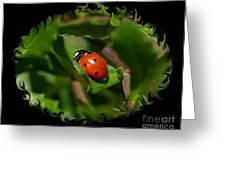 Ladybug With Swirly Framing Greeting Card