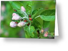 Ladybugs On Apple Blossoms Greeting Card