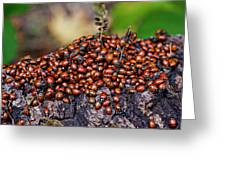 Ladybugs On Branch Greeting Card by Garry Gay
