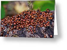 Ladybugs On Branch Greeting Card