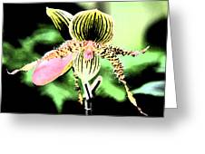 Lady's Slipper Orchid Greeting Card