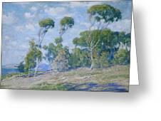 Laguna Trees Greeting Card
