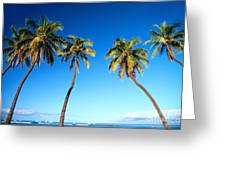 Lahaina Palms Greeting Card