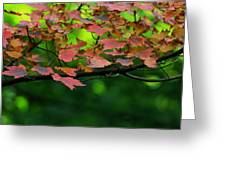 Laid Upon The Branches Greeting Card
