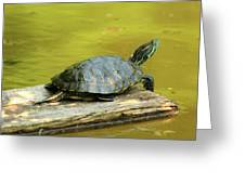 Laidback Turtle Greeting Card