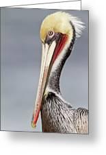 La Jolla Pelican Greeting Card