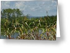 Lake Apopka Greeting Card