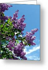 Lake Country Lilacs Greeting Card