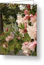 Lake Crescent Lodge Rhododendrons Greeting Card