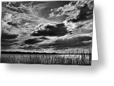 Lake Dora Black And White Greeting Card