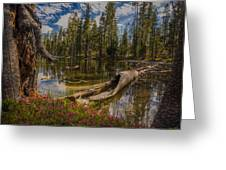 Lake Eleanor Greeting Card