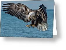 Lake Erie Eagle Greeting Card