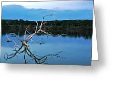 Lake Fryer Tree Greeting Card