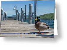 Lake George Duck Greeting Card