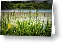 Lake Lily Greeting Card