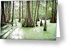 Lake Martin Swamp Greeting Card