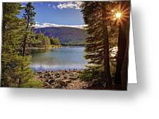 Lake Mary Forest Star Greeting Card