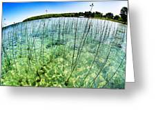 Lake Mindemoya Wading In The Reeds Greeting Card