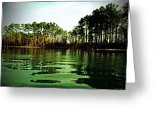 Lake Murray Trees Greeting Card