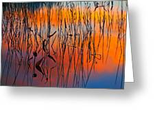 Lake Reeds And Sunset Colors Greeting Card
