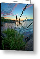 Lake Sunset And Sedge Grass Silhouettes, Pocono Mountains Greeting Card