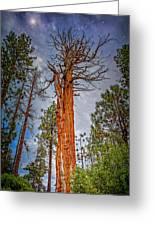 Lake Tahoe Trees On 89  Greeting Card