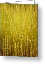 Lake Tahoe Wild Grasses Greeting Card