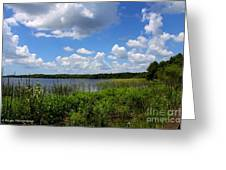 Lake Tarpon Greeting Card