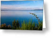 Lake Taupo Greeting Card