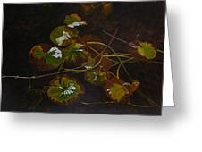 Lake Washington Lily Pad 16 Greeting Card