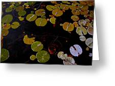 Lake Washington Lilypad 8 Greeting Card