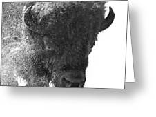 Lamar Valley Bison Black And White Greeting Card