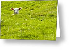 Lamb In A Dip Greeting Card