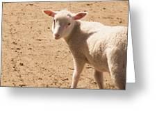Lamb Looking Cute. Greeting Card