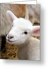 Lamb Greeting Card by Michelle Calkins