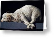 Lamb Of God. Agnus Dei Greeting Card
