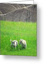 Lambs In A Sea Of Green Greeting Card