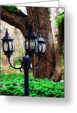 Lamppost And Oak Greeting Card