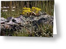 Lanceleaf Stonecrop Sedum 1 Greeting Card by Roger Snyder
