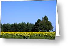 Land Of Sunflowers Greeting Card
