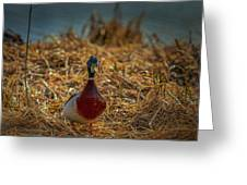 Landed Duck #g2 Greeting Card