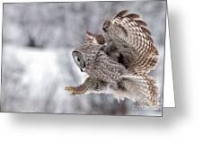 Landing Great Grey Owl Greeting Card